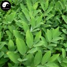 Buy RHIZOMA POLYGONATI ODORATI Seeds 120pcs Plant Polygonatum Odoratum For Yu Zhu