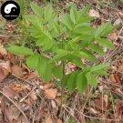 Buy CORTEX DICTAMNI Seeds 120pcs Plant Densefruit Pittany For Bai Xian Pi