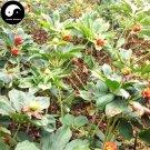 Buy Rhizoma Paridis Seeds 24pcs Plant Chinese Paris Rhizome For Yunnan Chong Lou