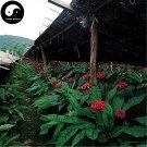 Buy Korean Ginseng Seeds 200pcs Plant Chinese Panax Ginseng For Gao Li Shen