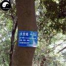 Buy Cinnamomum Pedunculatum Seeds 200pcs Plant Cinnamomum Tree For Tian Zhu Gui