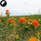 Buy Flos Carthami Seeds 400pcs Plant Carthamus Tinctorius For Safflower Hong Hua