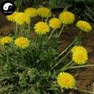 Buy Herba Taraxaci Seeds 400pcs Plant Mongolian Dandelion Herb For Pu Gong Ying