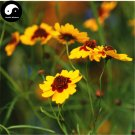 Buy Sanvitalia Procumbens Seed 100pcs Plant Snow Daisy Flower For Kun Lun Xue Ju