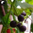 Buy Black Nightshade Herb Seed 200pcs Plant Herba Solani Nigri For Long Kui