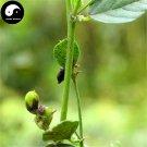 Buy Fructus Psoraleae Seeds 200pcs Plant Chinese Malaytea Scurfpea For Bu Gu Zhi