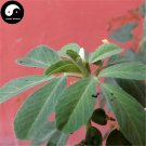 Buy Common Fenugreek Seeds 100pcs Plant Chinese Trigonellae Herb For Hu Lu Ba