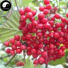 Buy Schisandra Chinensis Seeds 200pcs Plant Schisandra Berry Tree For Wu Wei Zi