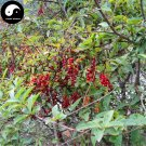 Buy Schisandra Chinensis Seeds 100pcs Plant Schisandra Berry Tree For Wu Wei Zi