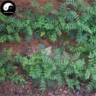Buy Red Peppercorn Tree Seeds 100pcs Plant Zanthoxylum Bungeanum For Hua Jiao