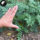Buy Red Peppercorn Tree Seeds 200pcs Plant Zanthoxylum Bungeanum For Hua Jiao