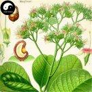 Buy Herb Radish Seeds 100pcs Plant Raphanus Sativus For Lai Fu Zi