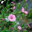 Buy Cowherb Seeds 400pcs Plant Vaccaria Segetalis For Herb Wang Bu Liu Xing