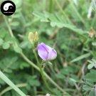 Buy Astragali Complanati Seeds 200pcs Plant Flastem Milkvetch For Sha Yuan Zi
