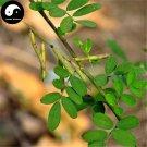 Buy Indigofera Pseudotinctoria Seed 100pcs Plant Herba Ma Ji For Yi Wei Yao
