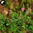 Buy Indigofera Pseudotinctoria Seed 400pcs Plant Herba Ma Ji For Yi Wei Yao
