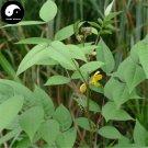 Buy Cassia Occidentalis Seeds 100pcs Plant Herba Coffee Senna For Wang Jiang Nan