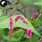 Buy Polygoni Orientalis Seeds 200pcs Plant Polygonum Orientale For Shui Hong Hua