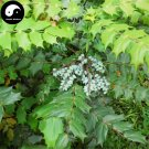 Buy Mahonia Bealei Seeds 120pcs Plant Mahonia Fortunei For Shi Da Gong Lao
