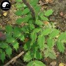 Buy Mahonia Bealei Seeds 60pcs Plant Mahonia Fortunei For Shi Da Gong Lao