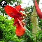 Buy Oroxylum Indicum Seeds 60pcs Plant Oroxyli Tree For Herb Mu Hu Die