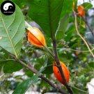 Buy Cape Jasmine Seeds 120pcs Plant Gardenia Jasminoides For Zhi Zi Hua