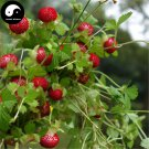 Buy Indian Strawberry Seeds 400pcs Plant Herba Duchesneae Indicae For She Mei