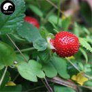 Buy Indian Strawberry Seeds 100pcs Plant Herba Duchesneae Indicae For She Mei