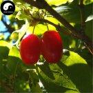 Buy Cornus Officinalis Seeds 60pcs Plant Cornus Tree For Chinese Shan Zhu Yu