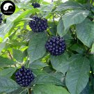 Buy Siberian Ginseng Seeds 240pcs Plant Acanthopanax Senticosus For Ci Wu Jia