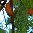 Buy Tamarindus Indica Seeds 120pcs Plant Tamarind Pulp Tree For Herb Suan Jiao