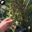 Buy Amomum Villosum Seeds 240pcs Plant Chinese Herb Amomi For Sha Ren