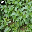 Buy Stevia Seeds 120pcs Plant Chinese Sugar Herb Stevia For Tian Ye Ju