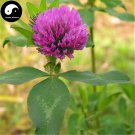 Buy Herba Red Clover Seeds 200pcs Plant Trifolium Pratense For Hong Che Zhou