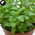 Buy Herba Menthae Seeds 400pcs Plant Peppermint For Mint Herb Bo He