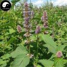 Buy Potchouli Herb Seeds 200pcs Plant Agastache Rugosa For Herba Guang Huo Xiang