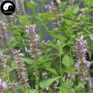 Buy Potchouli Herb Seeds 400pcs Plant Agastache Rugosa For Herba Guang Huo Xiang