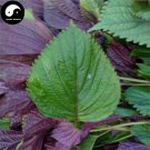 Buy Herb Perilla Seeds 100pcs Plant Herba Purple Basil For Perilla Leaf Zi Su