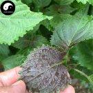 Buy Herb Perilla Seeds 200pcs Plant Herba Purple Basil For Perilla Leaf Zi Su