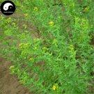Buy St.Johnwort Herb Seeds 100pcs Plant Hypericum Perforatum Guan Ye Lian Qiao
