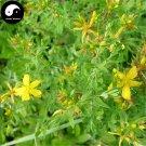 Buy St.Johnwort Herb Seeds 200pcs Plant Hypericum Perforatum Guan Ye Lian Qiao