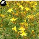 Buy St.Johnwort Herb Seeds 400pcs Plant Hypericum Perforatum Guan Ye Lian Qiao