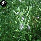 Buy Dianthus Superbus Seeds 400pcs Plant Herba Dianthi For Qu Mai Cao