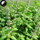 Buy Nepeta Cataria Seeds 400pcs Plant Herba Schizonepetae For Jing Jie