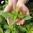Buy Nepeta Cataria Seeds 200pcs Plant Herba Schizonepetae For Jing Jie