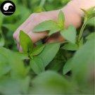 Buy Nepeta Cataria Seeds 100pcs Plant Herba Schizonepetae For Jing Jie