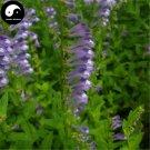 Buy Skullcap Herb Seeds 400pcs Plant Scutellariae Barbatae For Ban Zhi Lian