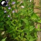 Buy Skullcap Herb Seeds 200pcs Plant Scutellariae Barbatae For Ban Zhi Lian
