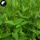 Buy Skullcap Herb Seeds 100pcs Plant Scutellariae Barbatae For Ban Zhi Lian