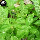Buy Sweet Basil Herb Seeds 100pcs Plant Herba Ocimi For Ocimum Basilicum Luo Le